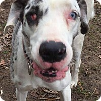 Adopt A Pet :: Daisy - URGENT - Louisville, KY