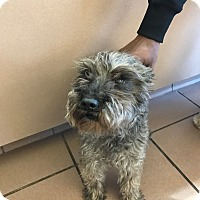Adopt A Pet :: Pako bonded with Karma - Las Vegas, NV