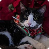 Adopt A Pet :: Miss Oreo - Staten Island, NY