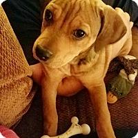 Adopt A Pet :: Melvyn - Newport Beach, CA