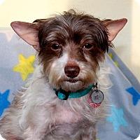 Adopt A Pet :: Talulah - 8 pounds - Los Angeles, CA