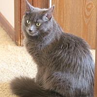 Adopt A Pet :: Nancy - Rawlins, WY