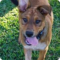 Adopt A Pet :: Madison - Santa Fe, TX