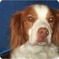 Adopt A Pet :: Riley - Niagara County SPCA - Buffalo, NY