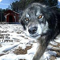 Adopt A Pet :: Saber - Gadsden, AL