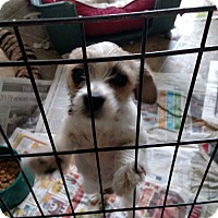 Adopt A Pet :: Mollie - Simi Valley, CA
