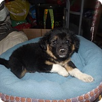 Adopt A Pet :: Ace - Quincy, IN