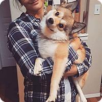Adopt A Pet :: Milo - Edmonton, AB