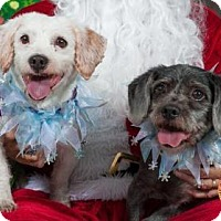 Adopt A Pet :: Mickey - Fort Myers, FL