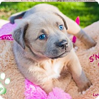 Adopt A Pet :: S'more Luv - Scottsdale, AZ