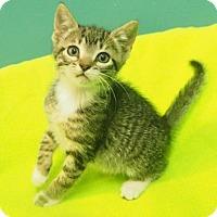 Adopt A Pet :: Jill - New Orleans, LA