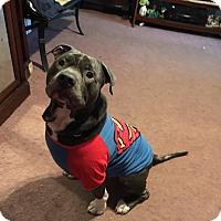 Adopt A Pet :: Mac - Toms River, NJ