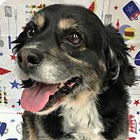 Adopt A Pet :: Scotty Smalls - Newington, VA