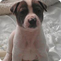 Adopt A Pet :: Geppetto - fairy tale litter - Phoenix, AZ