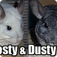 Adopt A Pet :: Frosty & Dusty - Virginia Beach, VA