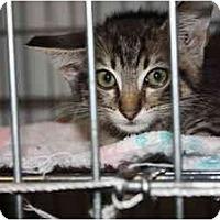 Adopt A Pet :: Sage - Owasso, OK