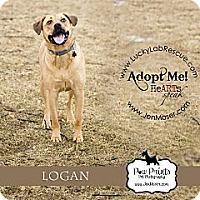 Adopt A Pet :: Logan - Lewisville, IN