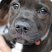 Adopt A Pet :: Pace - Orlando, FL