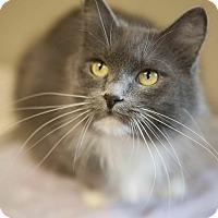 Adopt A Pet :: Ashley - Byron Center, MI