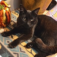 Adopt A Pet :: Jake - Troy, OH