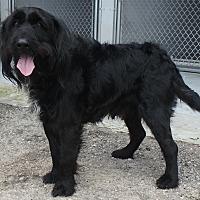 Adopt A Pet :: Rollo - Seguin, TX