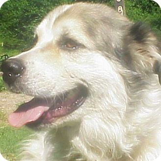 Great Pyrenees Mix Dog for adoption in Kyle, Texas - Mollie