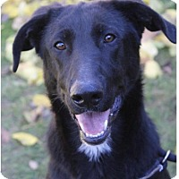 Adopt A Pet :: CHEVY:Low Fees/neutered - Red Bluff, CA