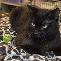 Adopt A Pet :: Rich - Ashtabula, OH