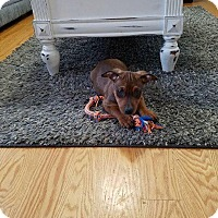 Adopt A Pet :: Gabriel - New Milford, CT