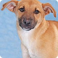 Adopt A Pet :: Rose Malow - Encinitas, CA