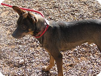 Terrier (Unknown Type, Small) Mix Dog for adoption in Post, Texas - Lee