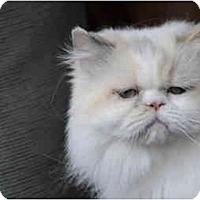 Adopt A Pet :: Kristobel - Columbus, OH