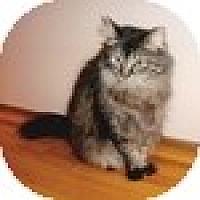 Adopt A Pet :: Ms. Tiggs - Vancouver, BC