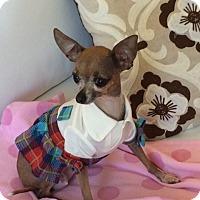 Adopt A Pet :: Treasure - Vacaville, CA