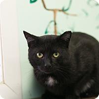 Adopt A Pet :: Styxx - Walden, NY