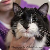 Adopt A Pet :: Pod - Byron Center, MI