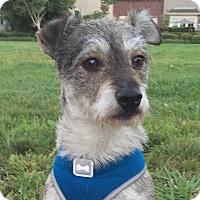Adopt A Pet :: Frank - San Francisco, CA