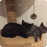 Adopt A Pet :: Faith & Chico - Barnegat, NJ