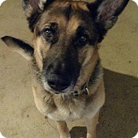 Adopt A Pet :: Dasher - Sinking Spring, PA