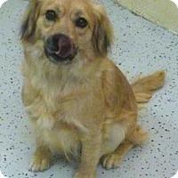 Adopt A Pet :: Missy - Avon, NY