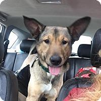 Adopt A Pet :: Baxter - Cleveland, OH