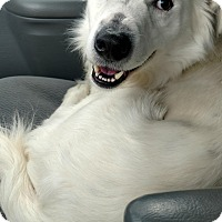 Adopt A Pet :: Lucky - Baltimore, MD