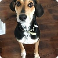 Adopt A Pet :: Dixie - St. Charles, IL