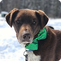 Adopt A Pet :: Java - Jefferson, NH