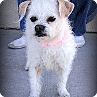 Adopt A Pet :: Noodle - Tijeras, NM