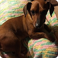 Adopt A Pet :: Buster Brown~adopted! - Glastonbury, CT