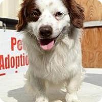 Adopt A Pet :: Buttons - Canoga Park, CA