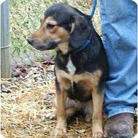 Adopt A Pet :: Sadie - Toronto/Etobicoke/GTA, ON