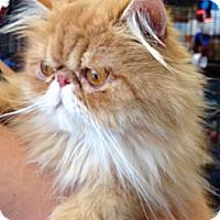 Adopt A Pet :: Louie - Beverly Hills, CA