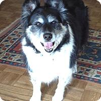 Adopt A Pet :: Pepper - Petaluma, CA